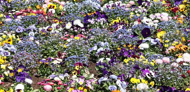 consociazione piante da fiore