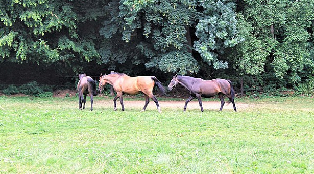 cavalli frieberger