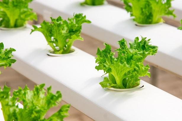 coltivazione-indoor