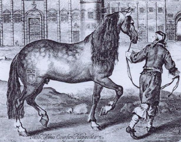 disegno Cavallo Napoletano