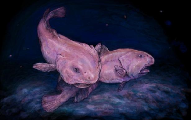 Pesce Blob