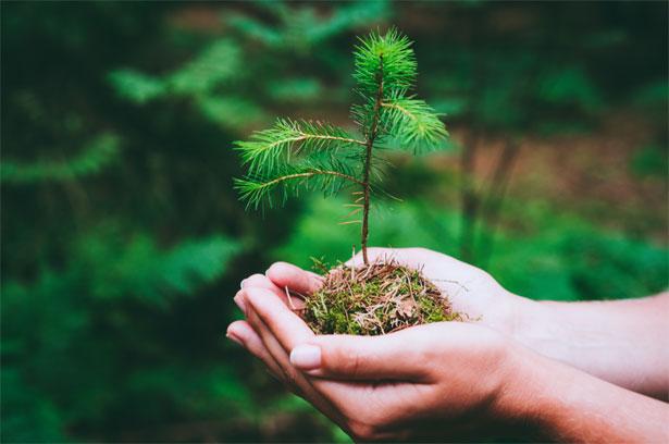 albero tra mani