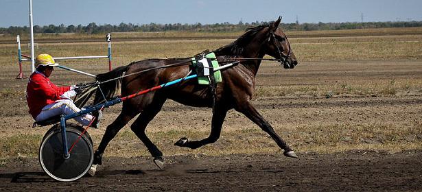 cavallo corsa orlov