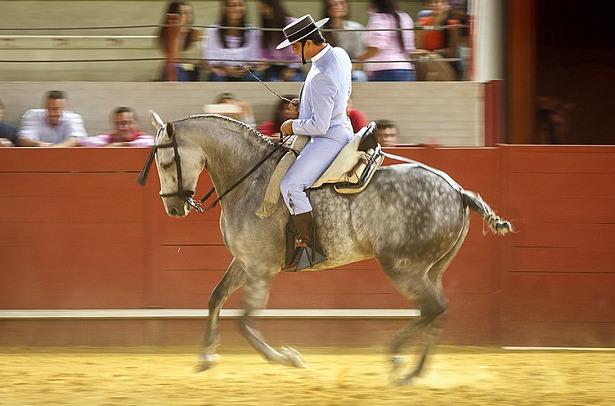 Cavallo Hispano