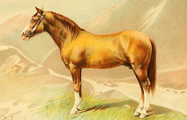 Cavallo Karabakh
