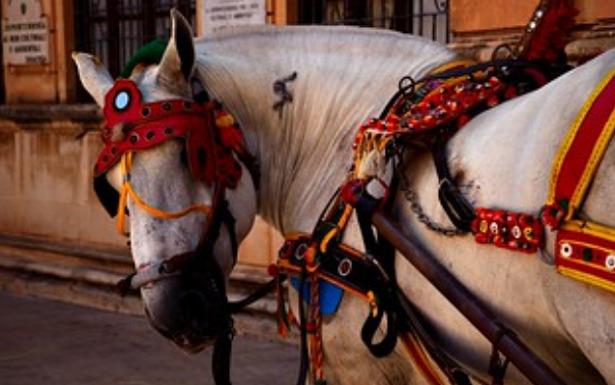 Cavallo Siciliano