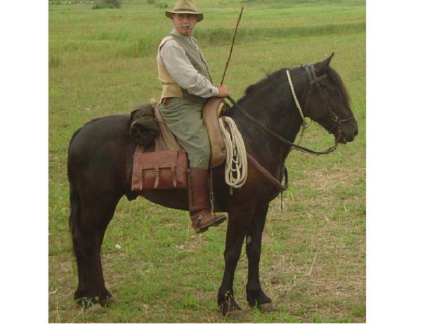 Cavallo Tolfetano lazio
