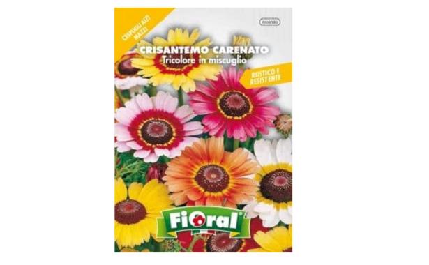 crisantemi-semi