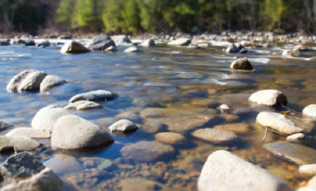 animali da fiume