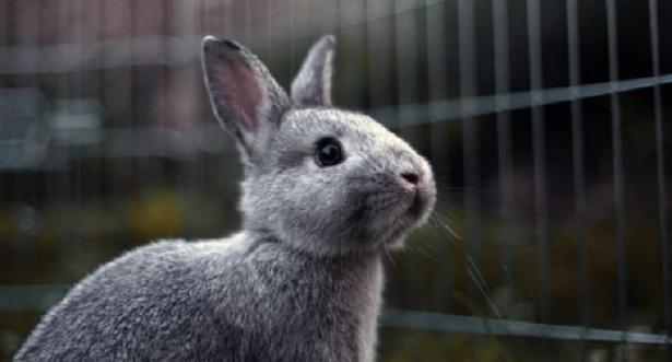 Casetta per conigli