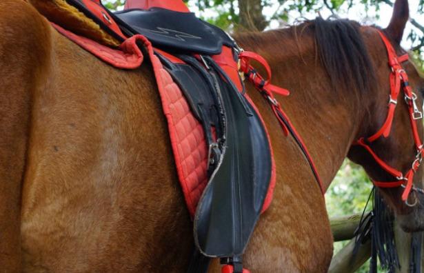 cavallo sella italiano groppa