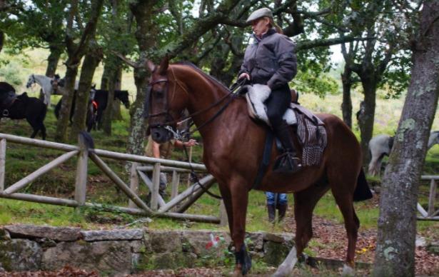cavallo sella italiano