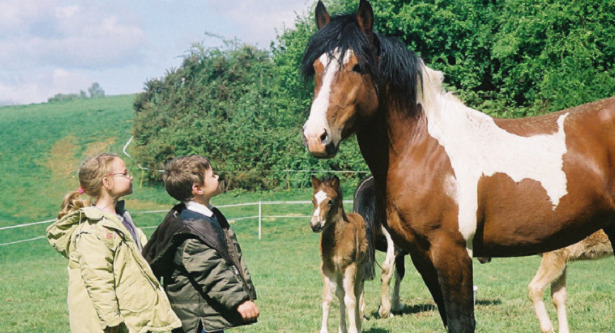 Cavallo Pottok bambini