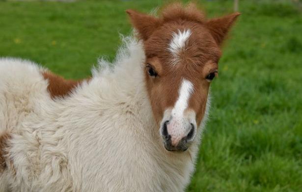 pony muso