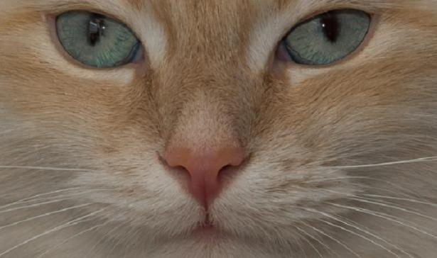baffi del gatto vibrisse