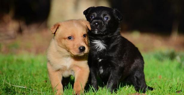 cani appena nati
