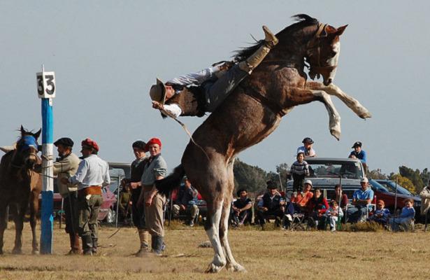Cavallo Criollo gare