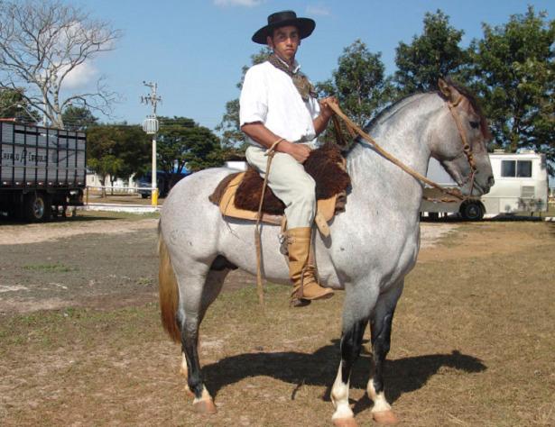 Cavallo Criollo