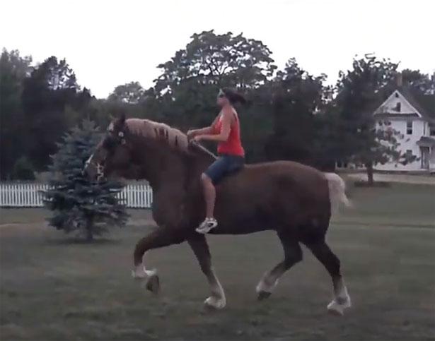 Cavallo più grande del mondo Jake