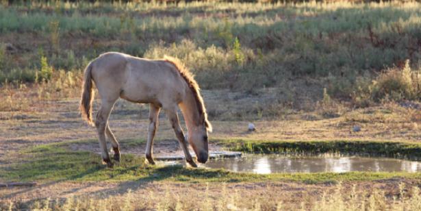 Cavallo Sorraia paesaggio