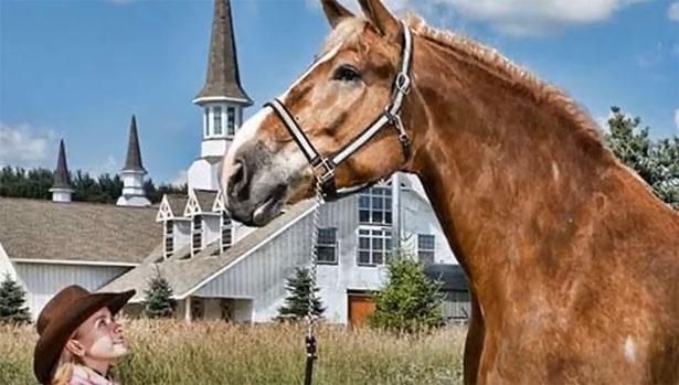 Jake Cavallo più grande del mondo