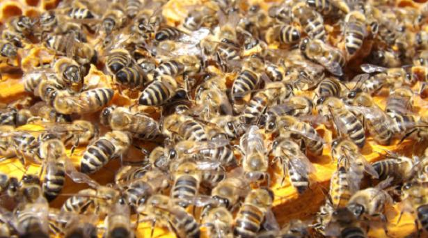 Architettura biomimetica api