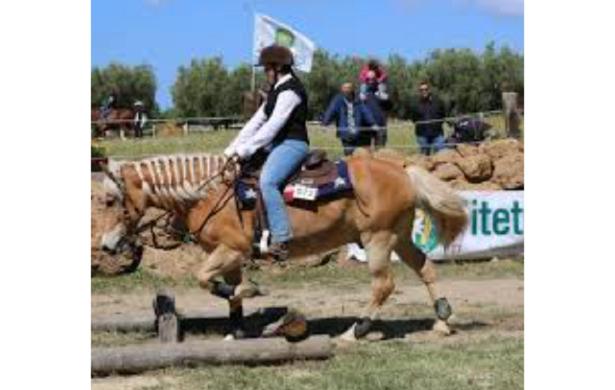 Mountain Trail horse