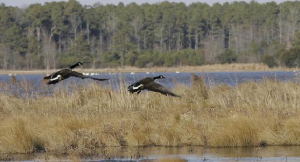 Uccelli in volo su laguna