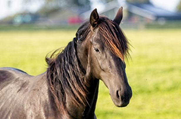 cavallo più bello mondo