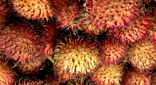 durian frutto