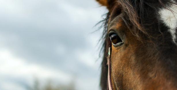 mezzo muso cavallo