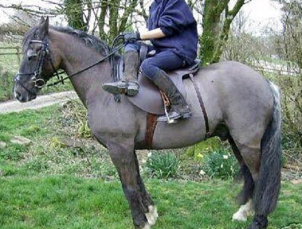 monta amazzone cavallo