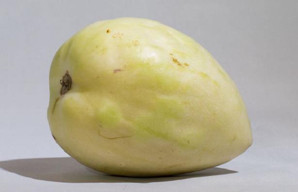 pepino frutto