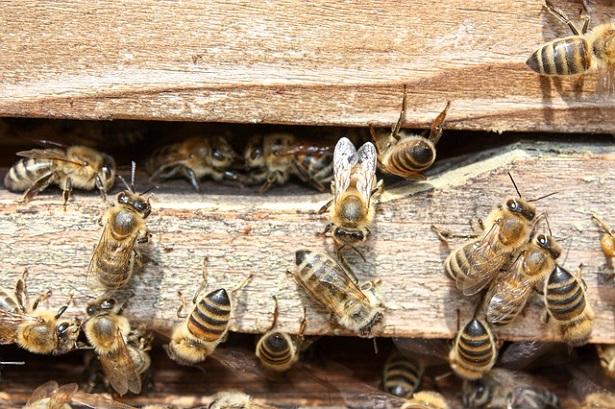 api in estinzione