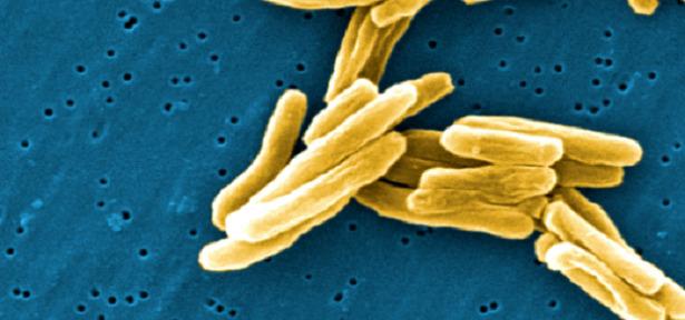 batteri alimenti