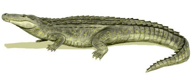 Purussaurus caimano