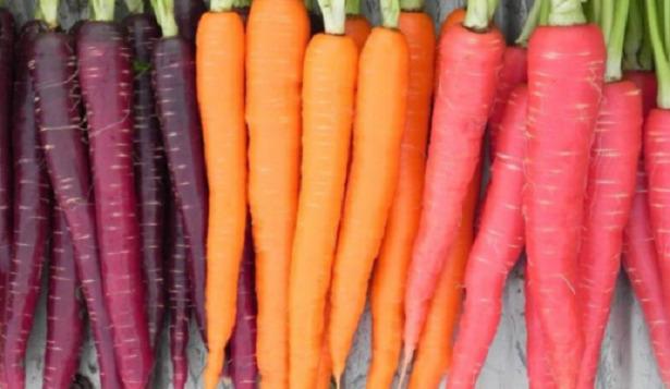carote colorate