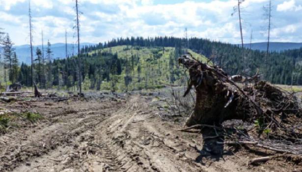 disboscamento foresta