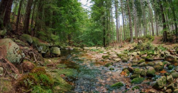 foresta primordiale
