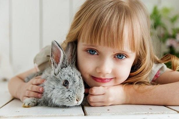 animali per bambini: coniglio