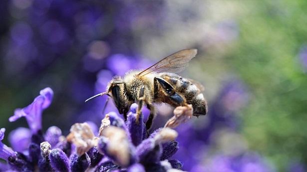 ape su fiore - biodiversità