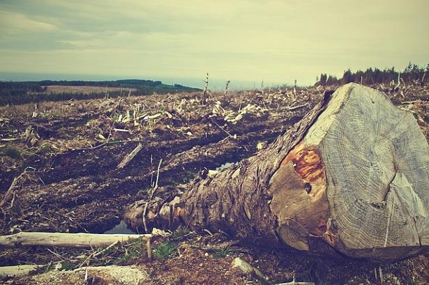Cause del riscaldamento globale: deforestazione