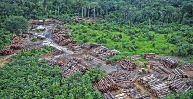 deforestazione effetto serra