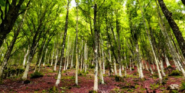 ecosistema foresta