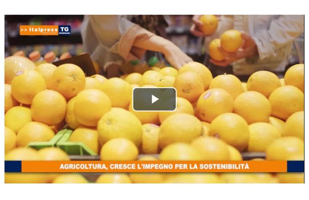 video tg ambiente italpress