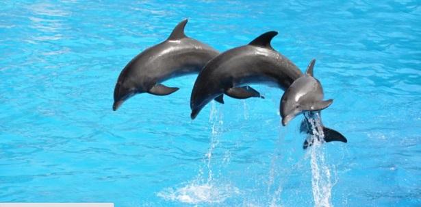delfini in salto