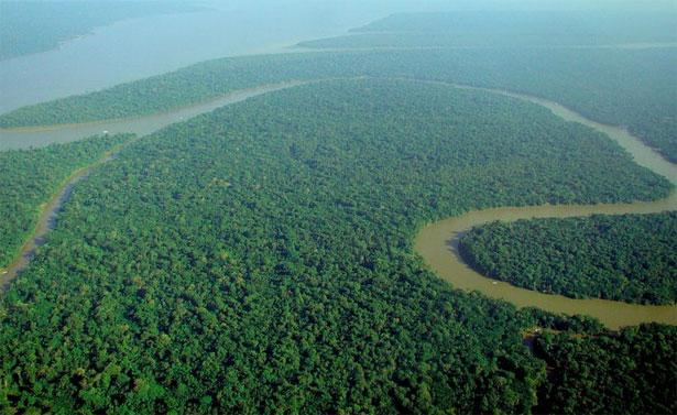 Foresta Amazonica dall'alto