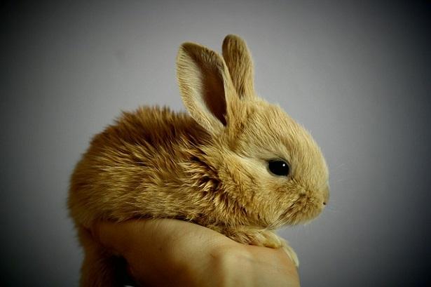 Conigli appena nati: cure