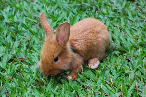 Come curare i conigli appena nati