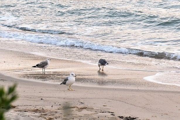 gabbiani sulla spiaggia